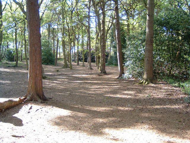 Taylor's Wood