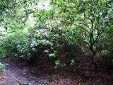 'Amphion' tree in Park Wood, 24 May 2014